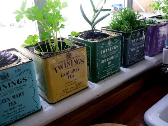 Invigorate your kitchen with an indoor herb garden Abbeywood