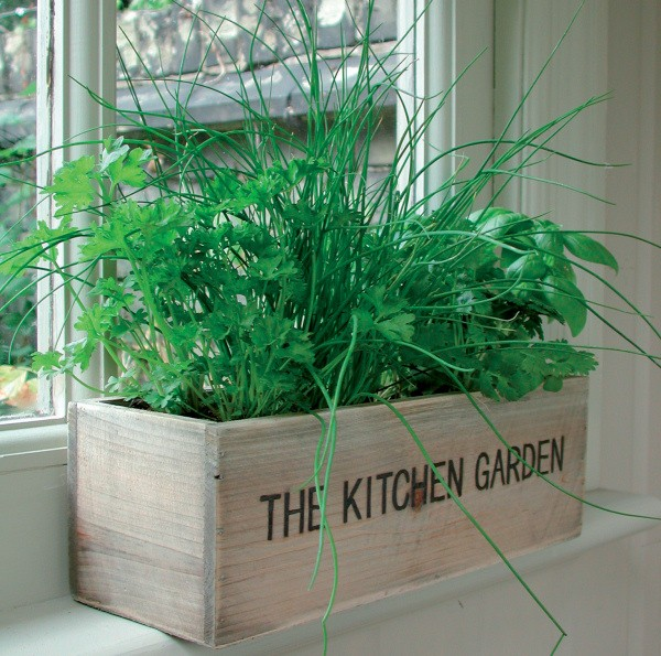 Invigorate Your Kitchen With An Indoor Herb Garden